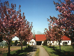 Holiday cottages bornholm  -  Frydenlund